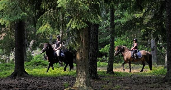 Ponyreiten und Pferde in Småland