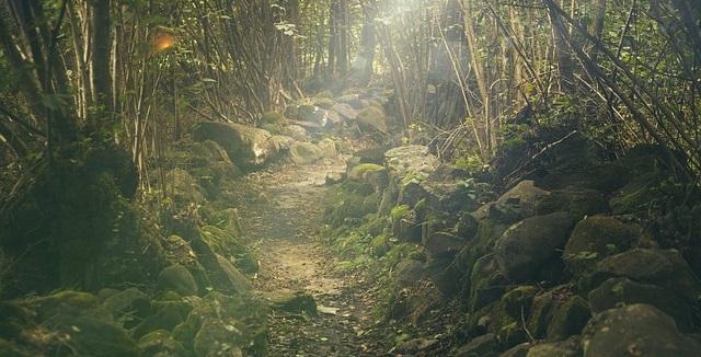 Wanderungen in Wald und Moor